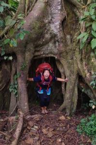 Tree cave!